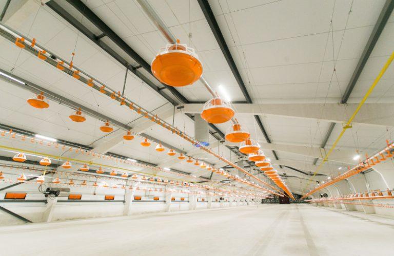 Sektor drobiowy modernizuje się