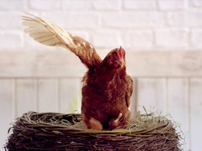 Jak w reklamie odnajduje się kurczak?