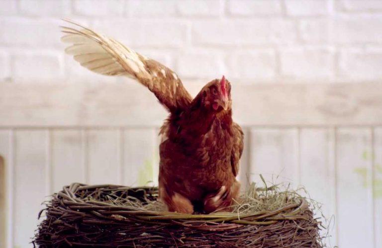 kurczak w reklamie
