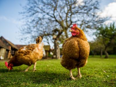 Popyt na Eko-LOGICZNE mięso? Co wymaga ulepszenia?